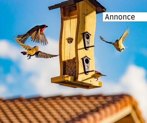 3 ting, du skal vide, før du fodrer fugle i haven