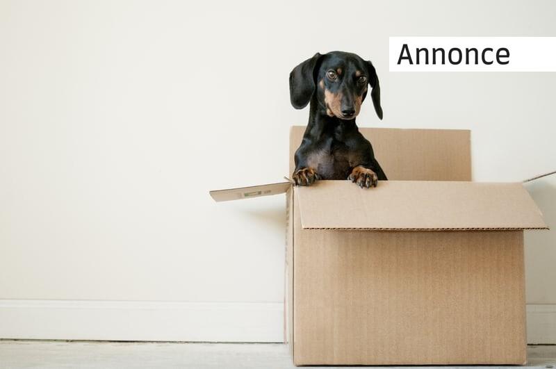 Tips til dig, som skal flytte hjemmefra for første gang